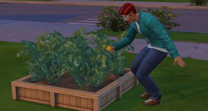 The Sims 4 Gardening - Harvesting Plants