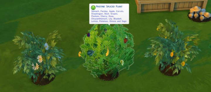 The Sims 4 Gardening - a Spliced Plant